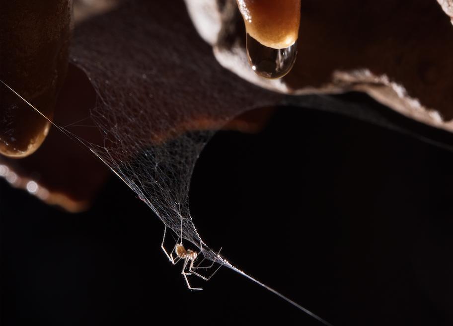 italian-cave-spider