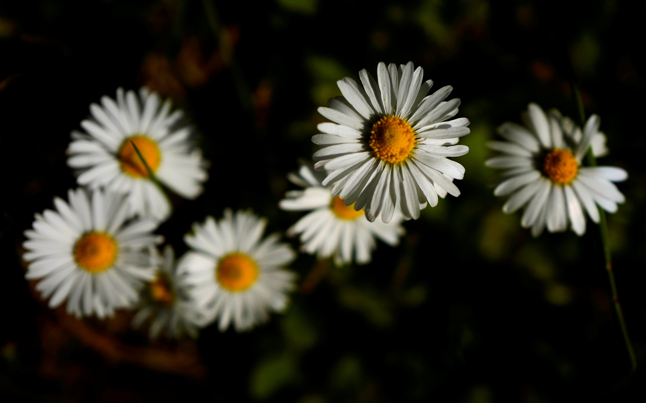 170 year old rare flowers accidentally destroyed in australia after australian security officers accidentally destroyed rare daisies from the 1850s after the paperwork got mixed up reuterskai pfaffenbach mightylinksfo