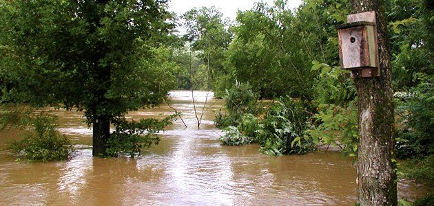 Arkansas Flooding,x-default