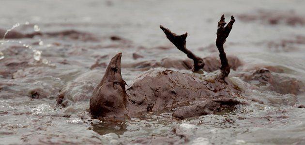 animals-oil-spill-wide