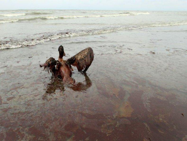 animal-oil-spill-2