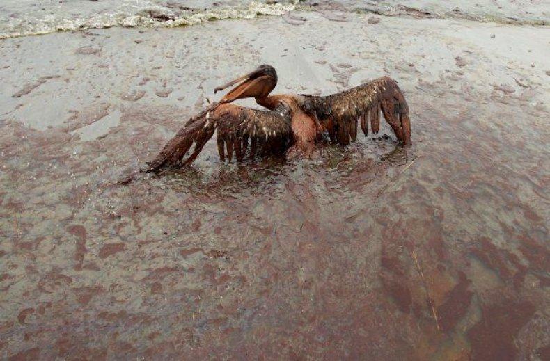 animals-oil-spill-4