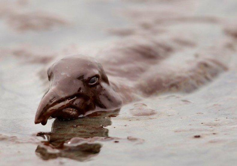animals-oil-spill-5