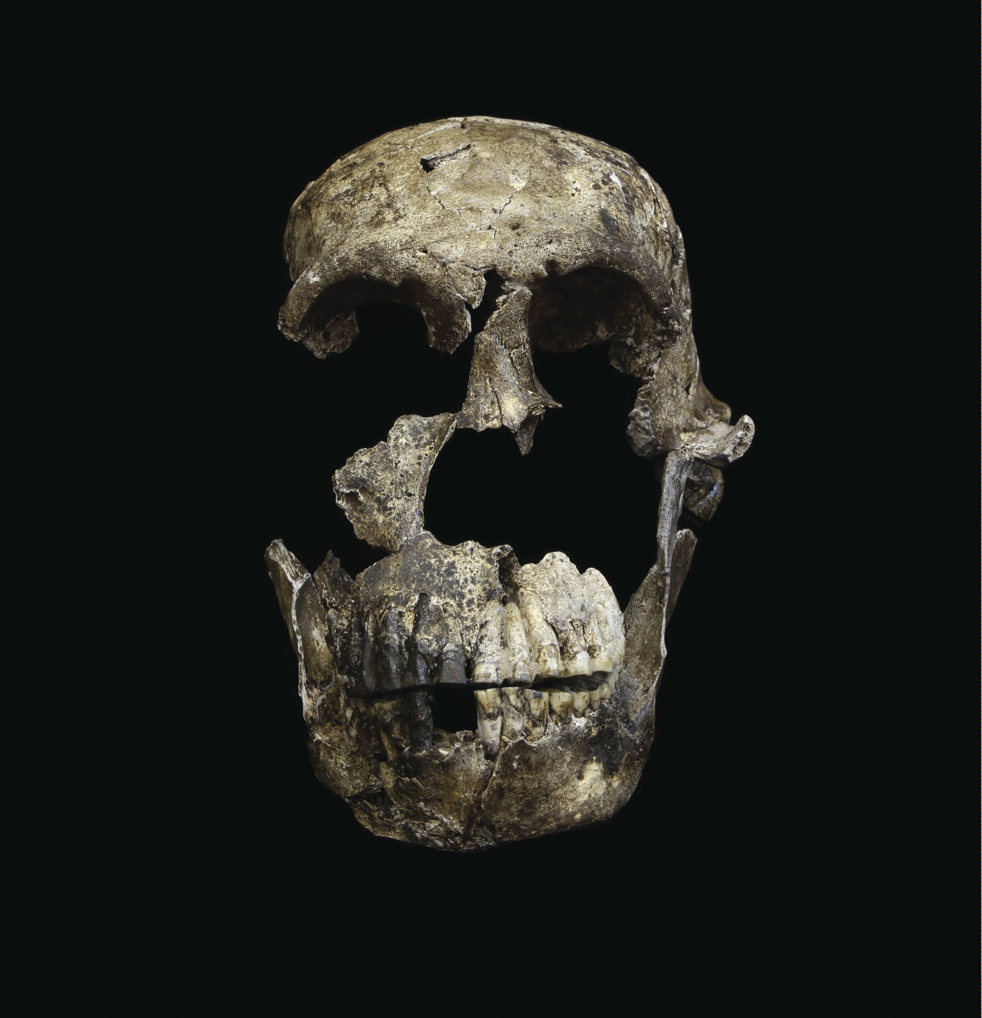 primitive humans or not A primitive form of hominid thought to have died out as modern humans evolved appears to have lived among us for years, new research into.