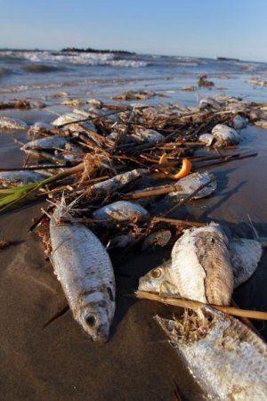 BP-spill-fish