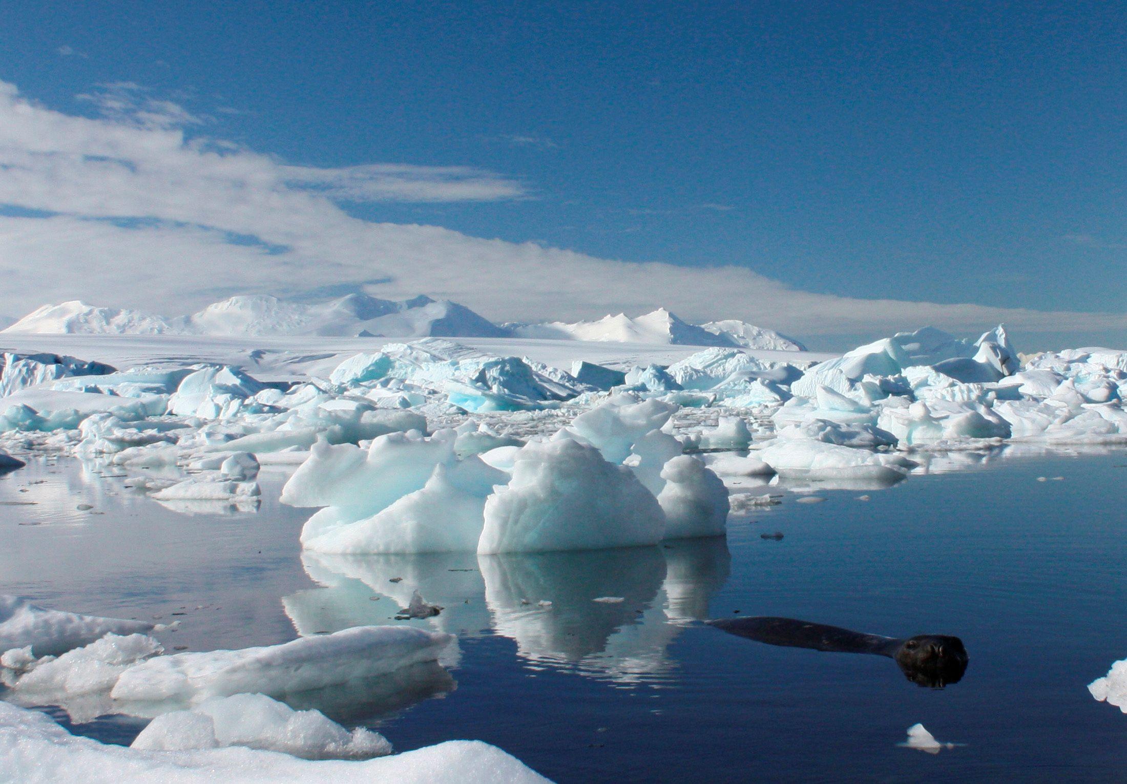 icebergs in the Antarctic