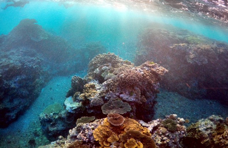 Coral Reefs Could Disappear Within Decades, Scientists Warn