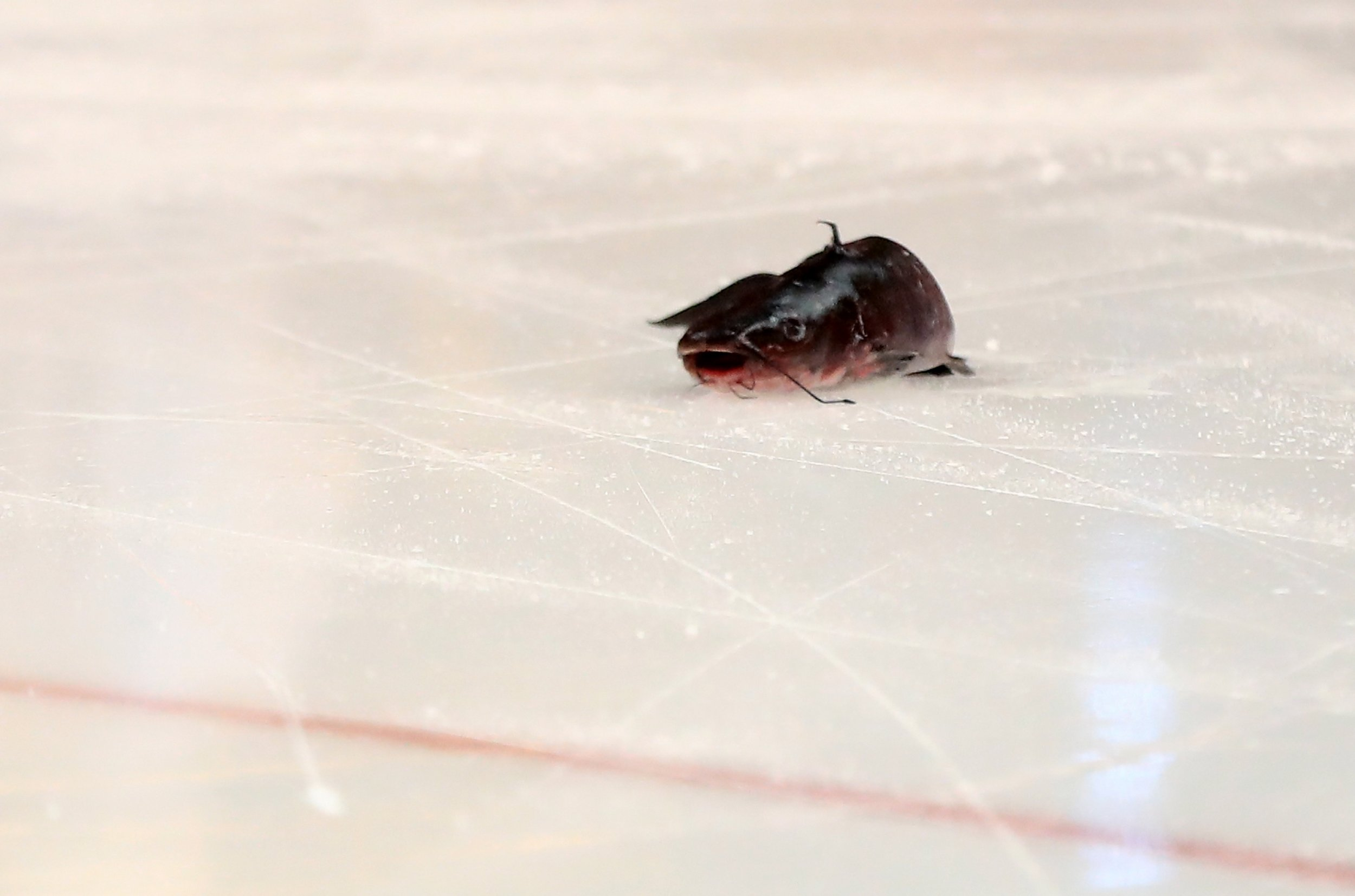 A catfish that was thrown on the ice is seen prior to Game Two of the Western Conference Final between the Nashville Predators and the Anaheim Ducks during the 2017 Stanley Cup Playoffs at Honda Center, Anaheim, May 14.