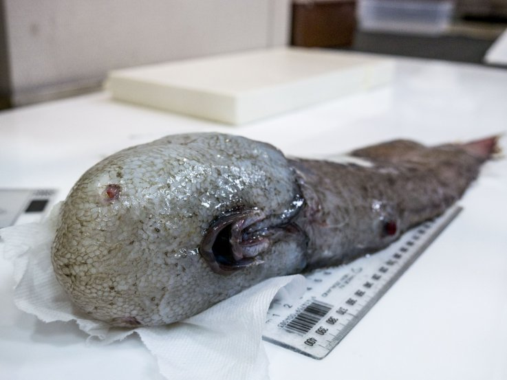 faceless fish photographer Asher Flatt