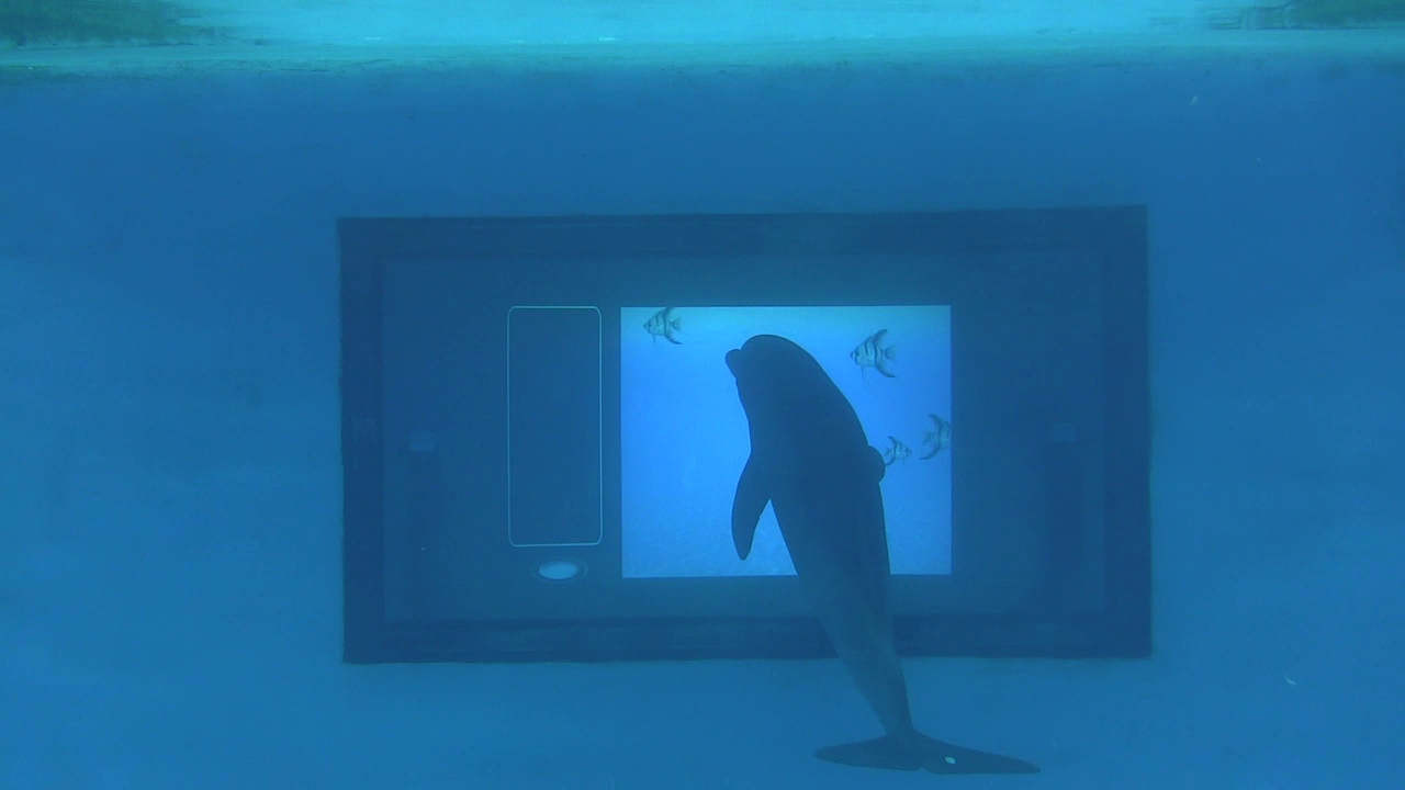Dolphin Touchscreen