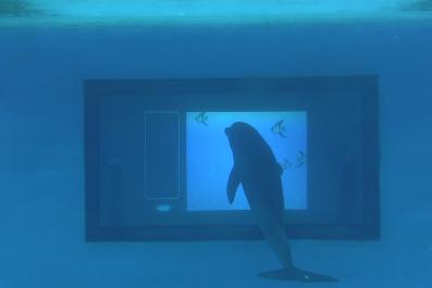 Dolphin Touchscreen