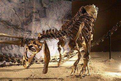 Allosaurus_mount