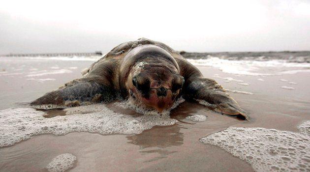 oil-spill-wildlife-deaths-arthead
