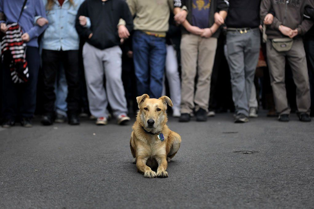 greek-dog-protest-intro