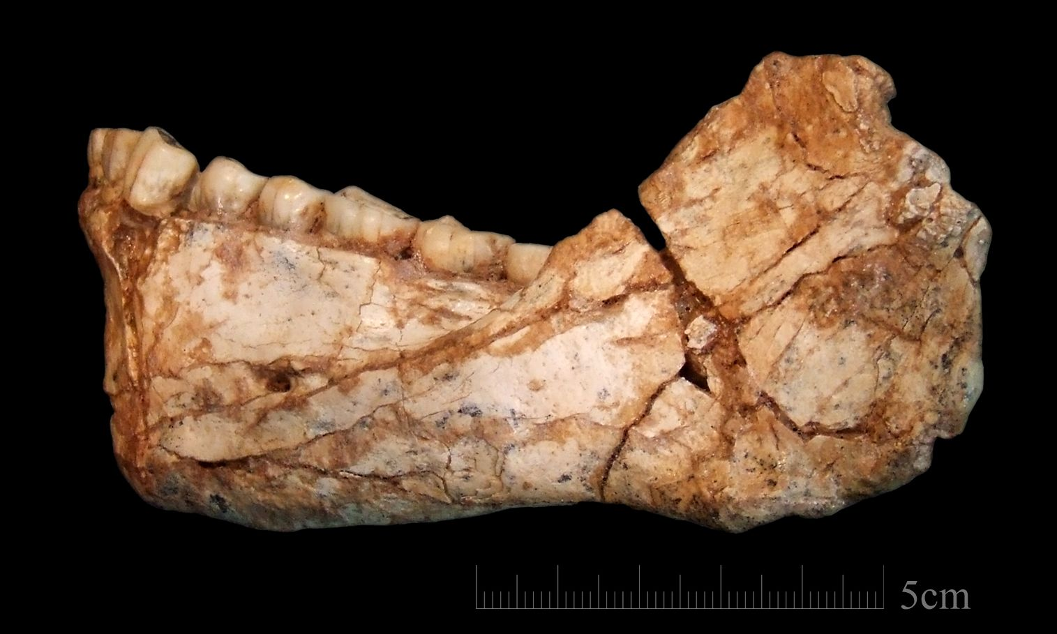 Earliest Ever Homo Sapiens Discovered in Morocco Forces ...