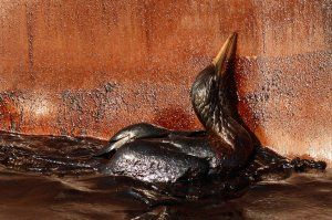 oil-spill-timeline-bird-may-9