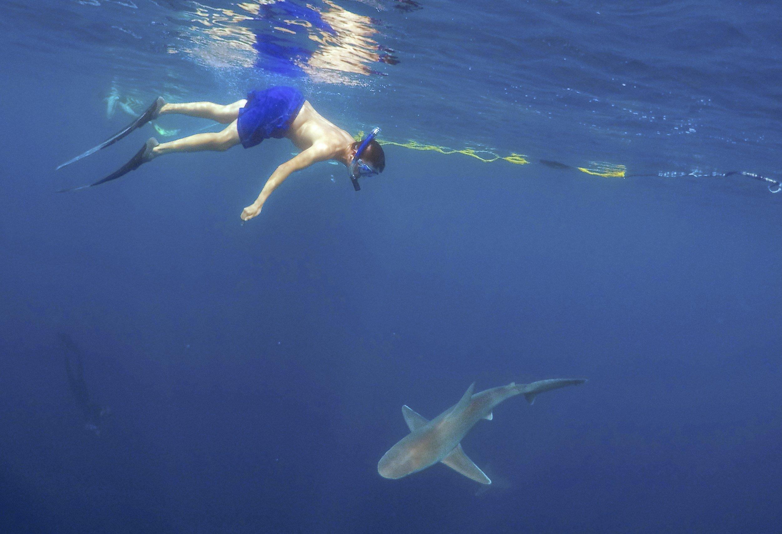 A swimming adventure essay