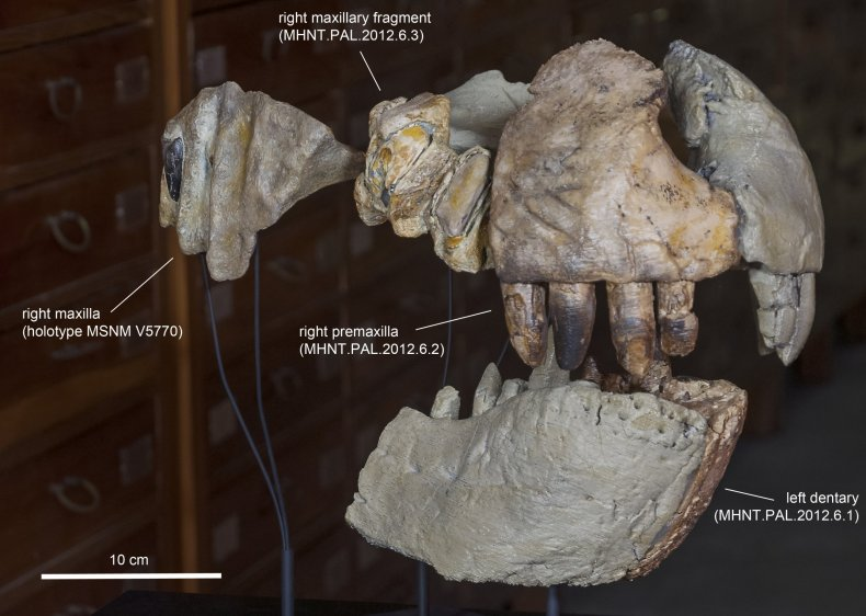 Reconstruction of the jaws of a giant ancient crocodile