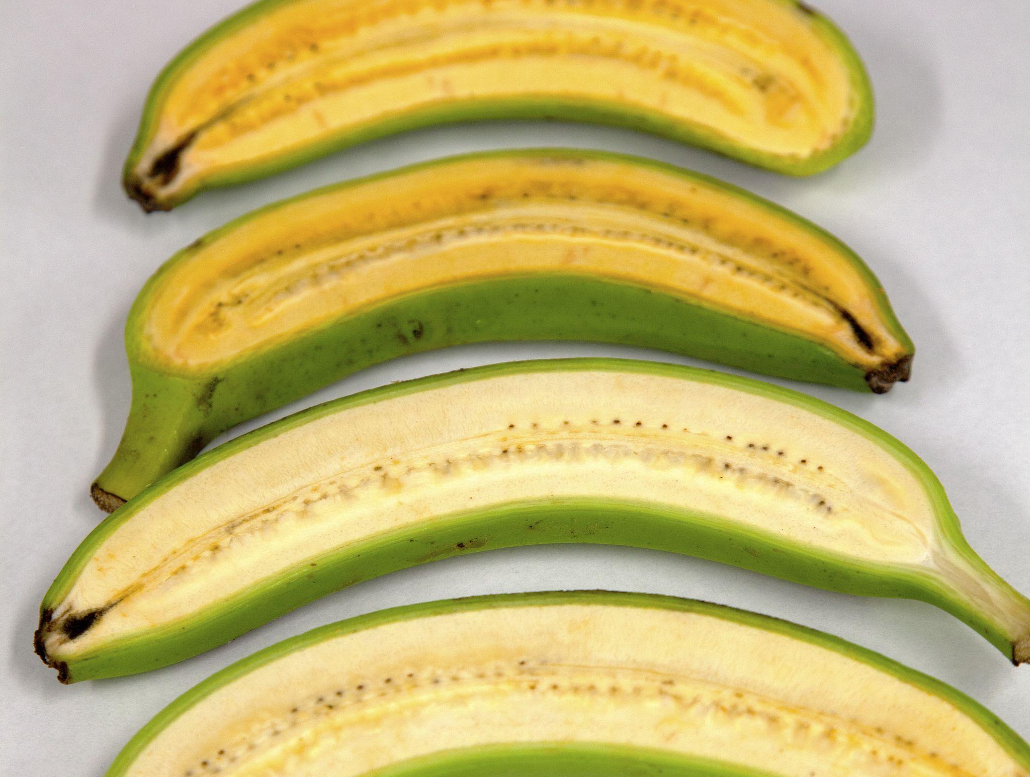 Yes, We Need No GMO Bananas | HuffPost