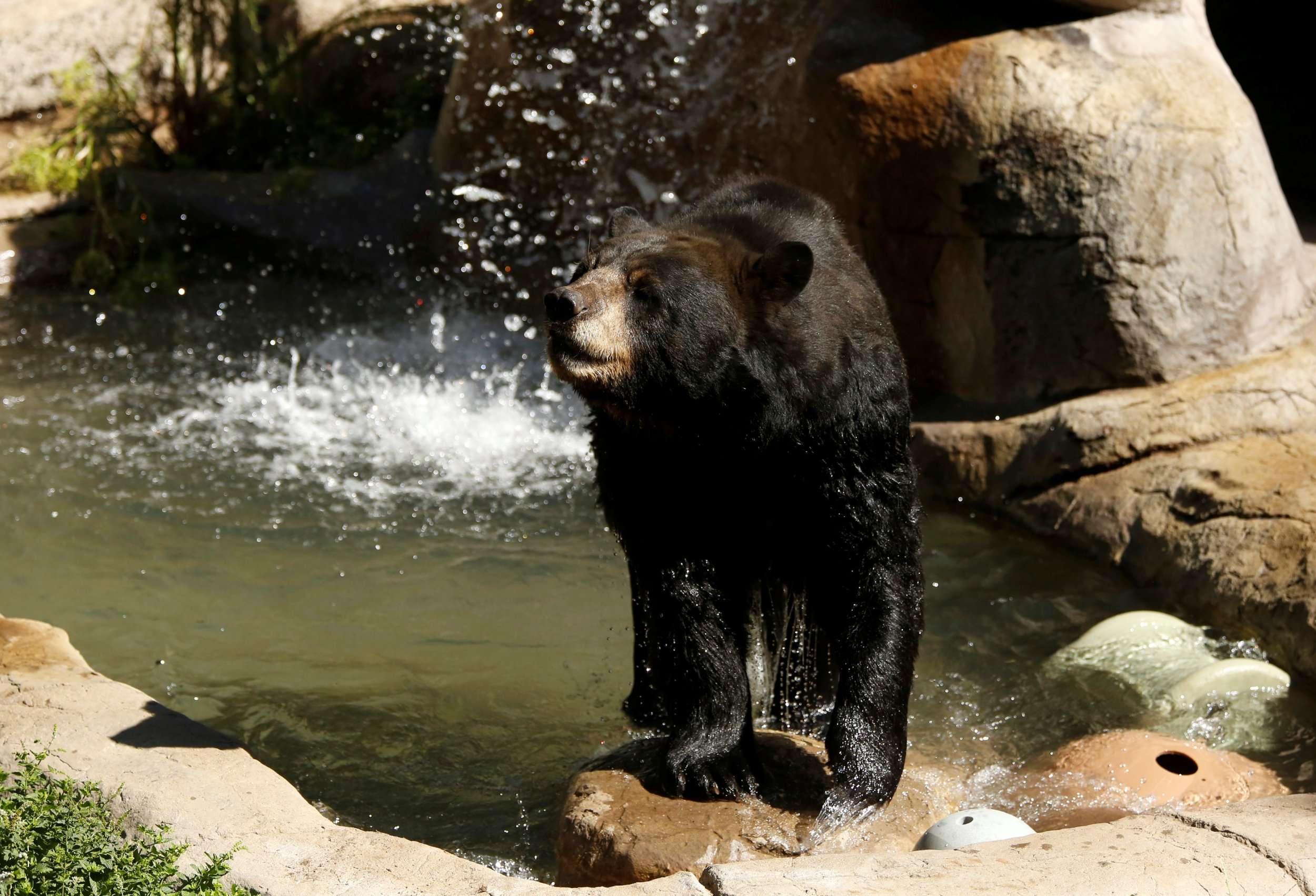 0707_black_bear_01