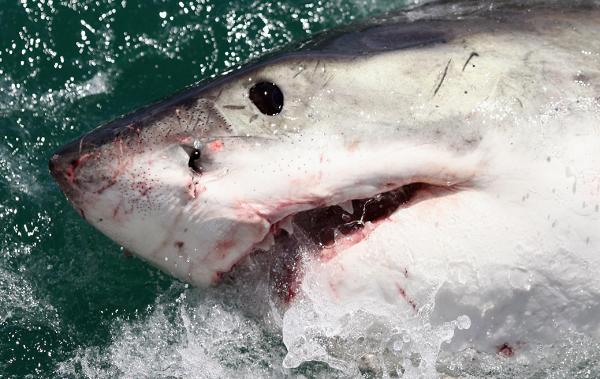 A Florida man is bitten by a shark near Miami Beach