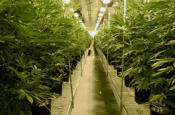 Nevada isn't the only state running out of pot
