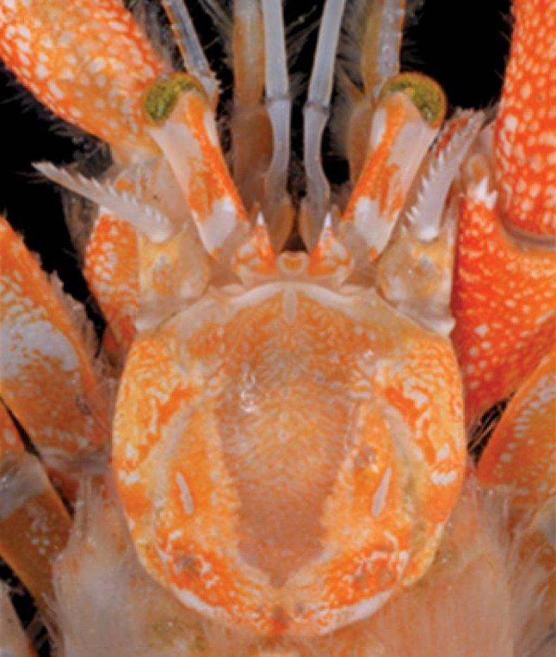 crab-eyes