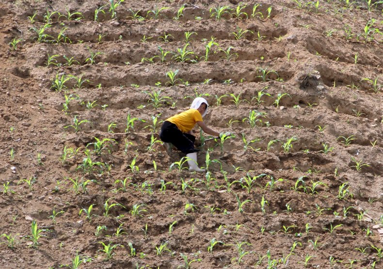North Korea farm drought