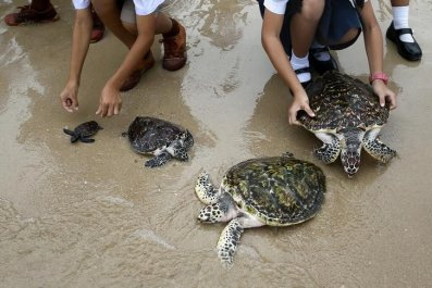 Sea Turtles release
