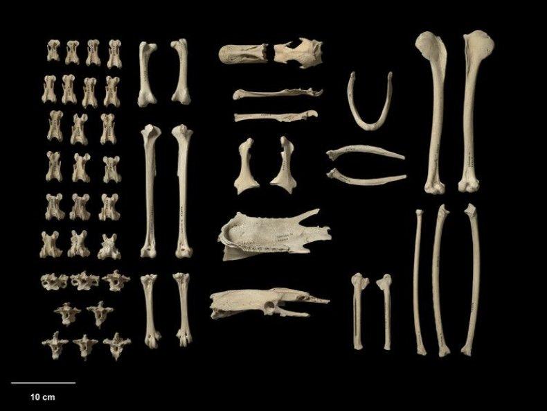 NZ bones