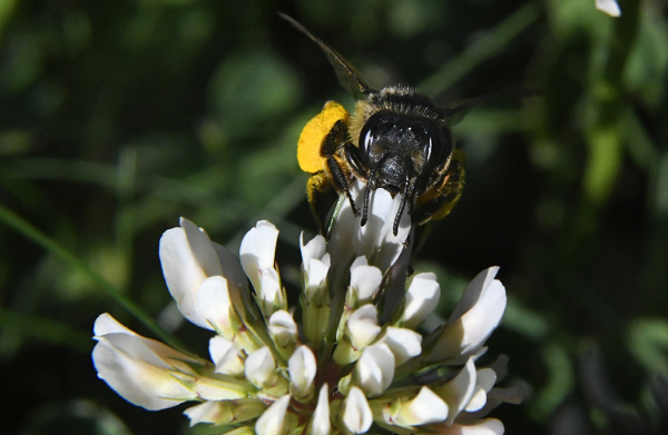 Honeybee populations are up again