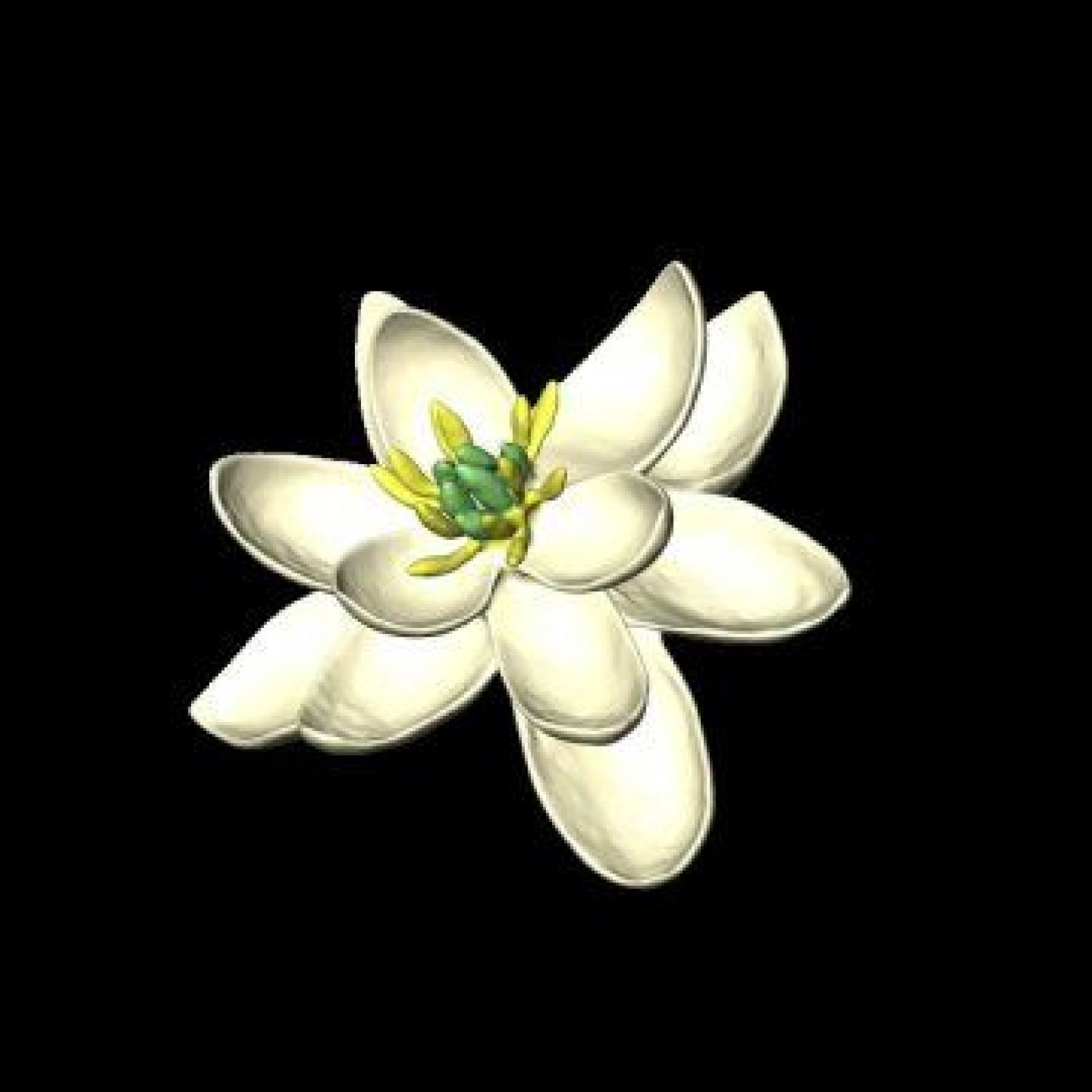 First Flower On Earth Scientists Discover Structure And Shape Of