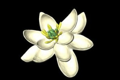 Scientists reveal what the first flower may have looked like