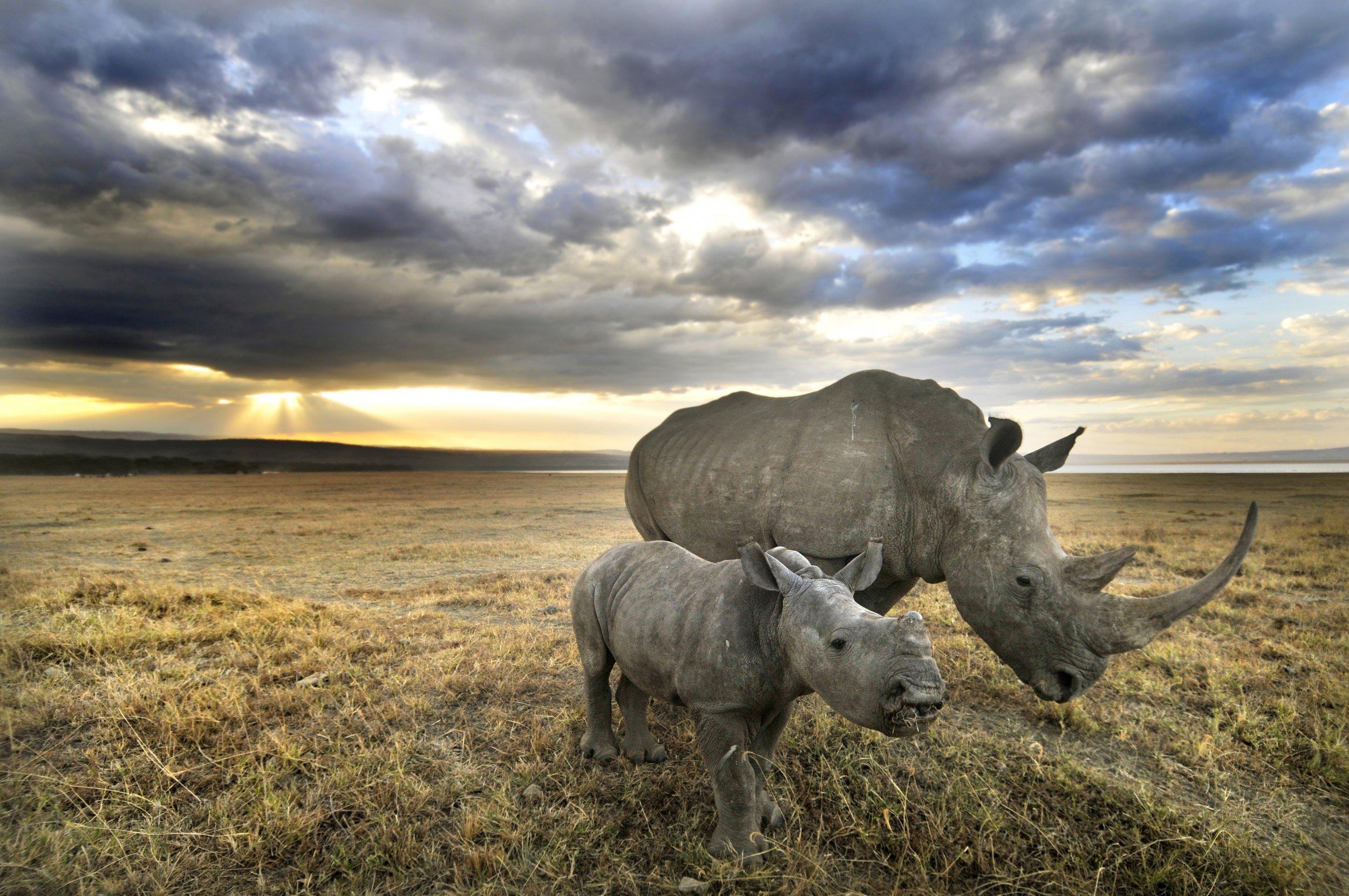 08_18_RhinoRaceWar_01
