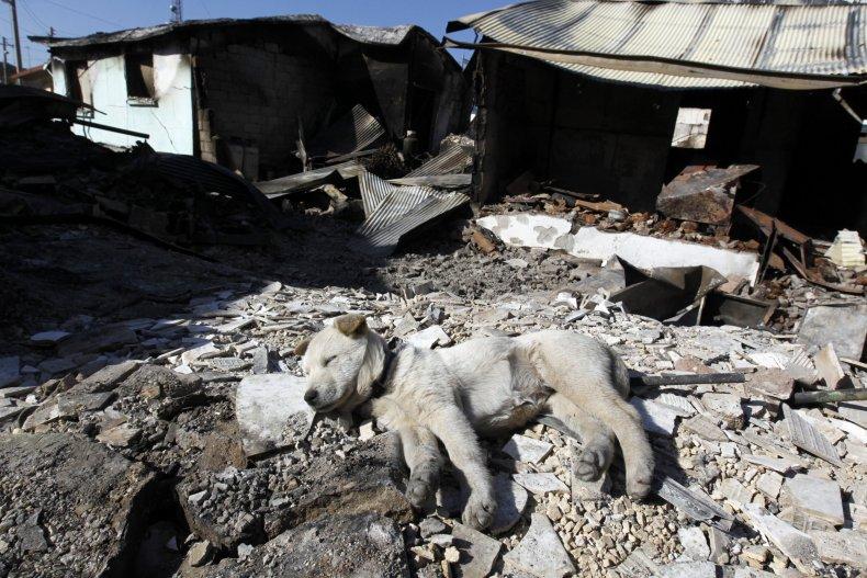 Yeonpyeong island shelling