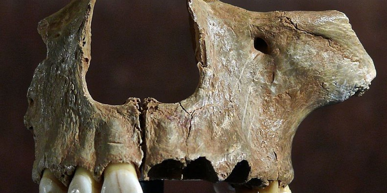 Skull_of_Gough's_Cave