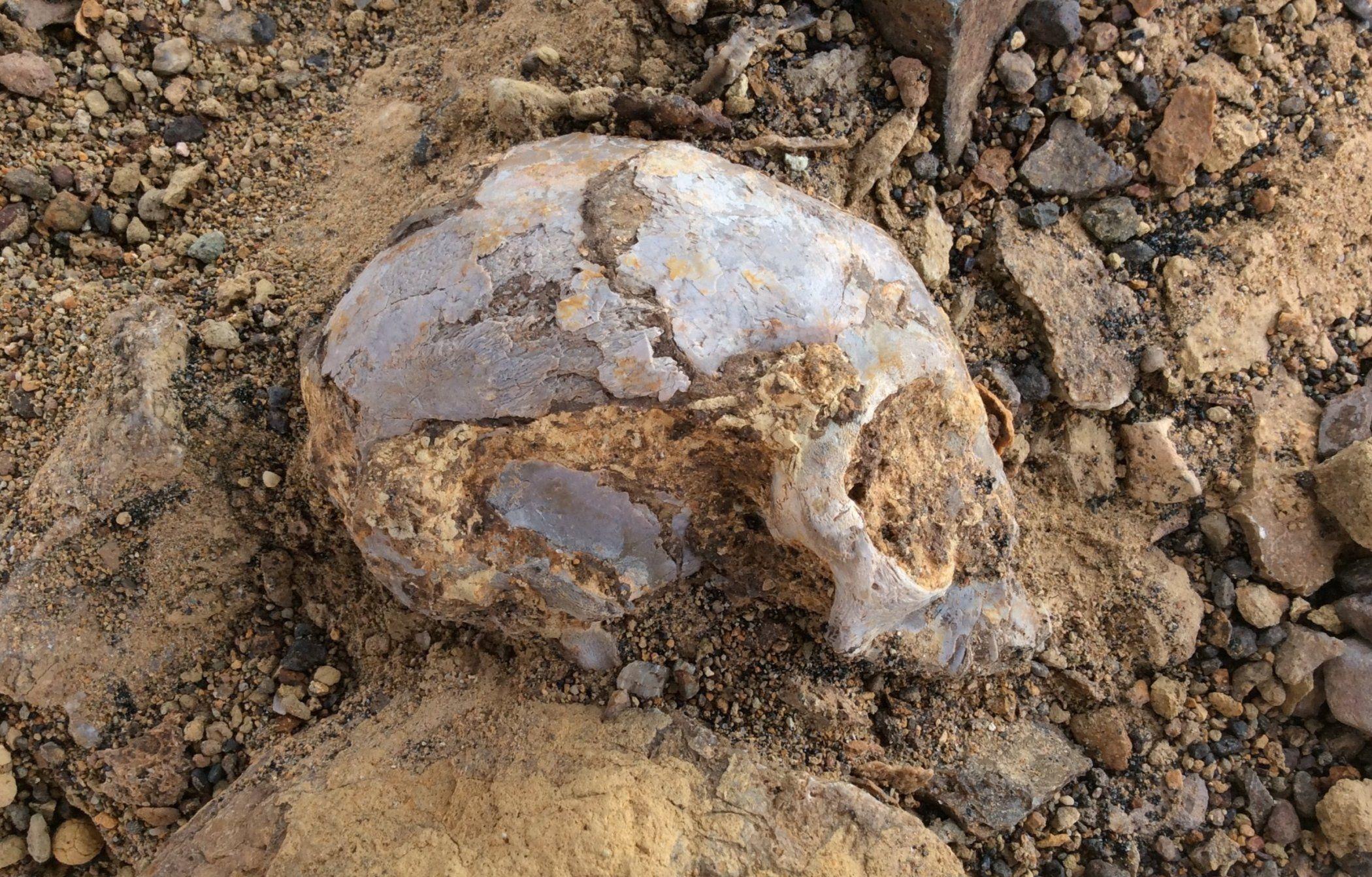 Alesi partially excavated