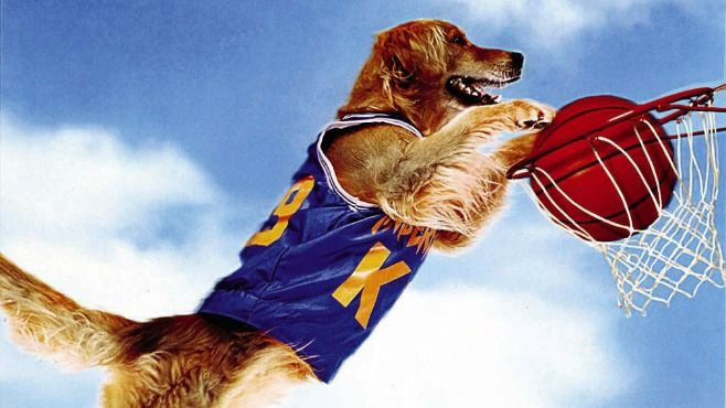 air bud came out 20 years ago so we tracked down the