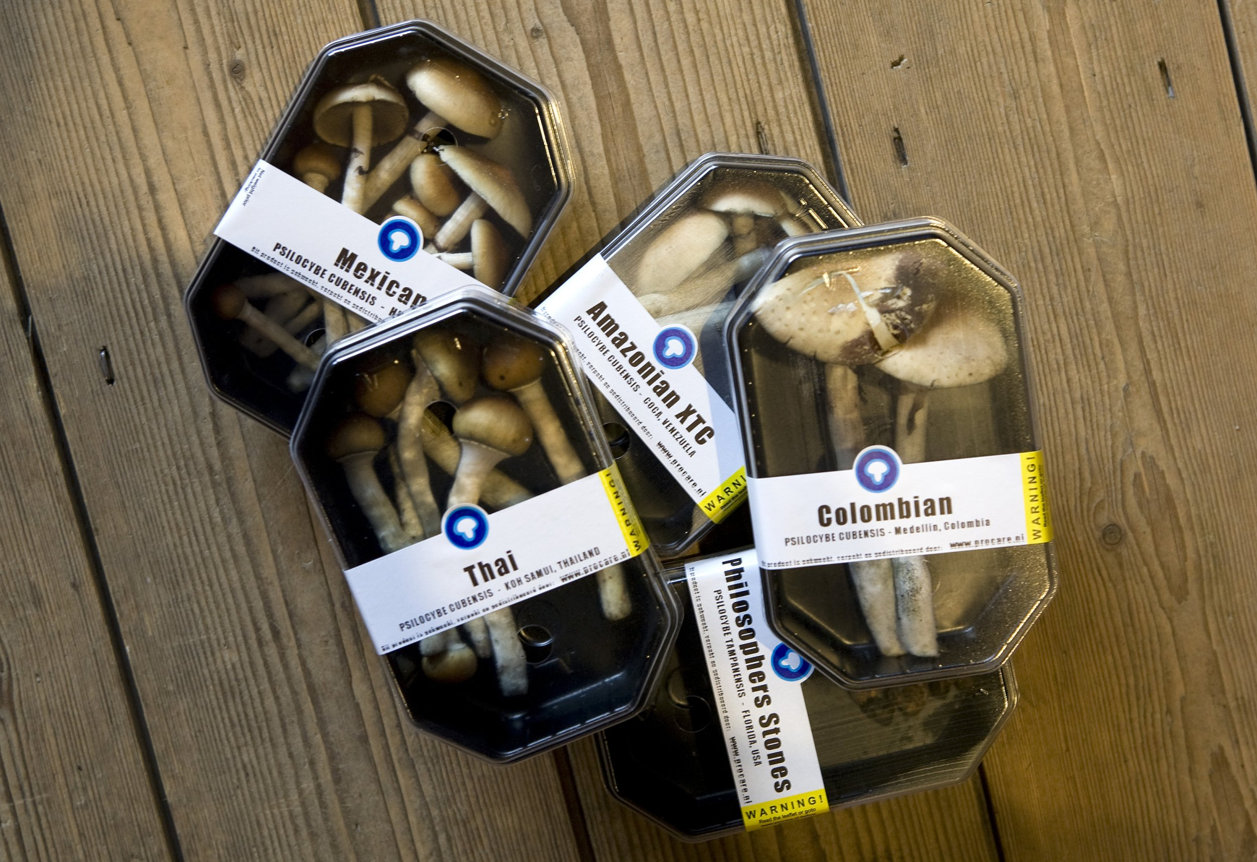 New Magic Mushrooms Discovery Could Reveal How to Make Your Own Drugs