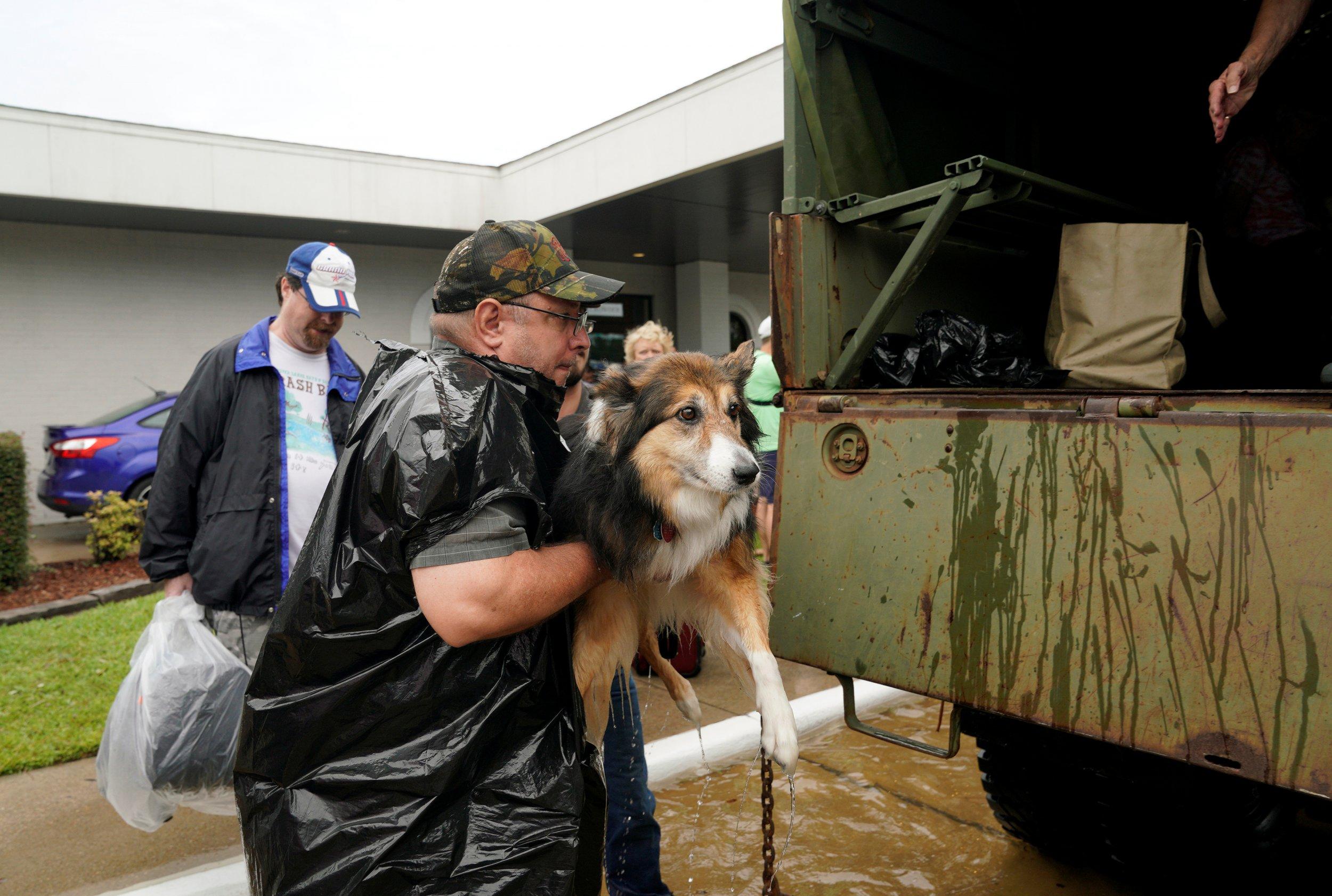 Hurricane Harvey Pet Rescue