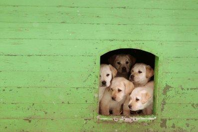 09_17_puppies_cdc