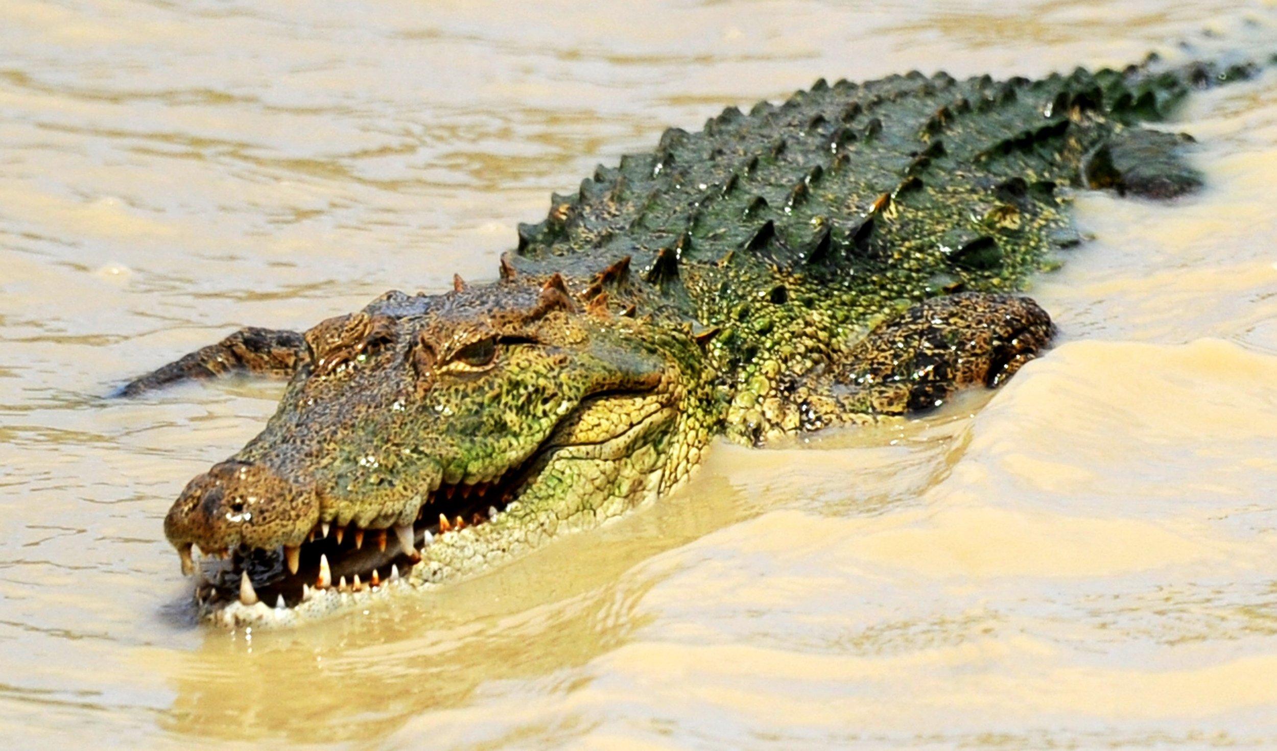 09_15_crocodile_SriLanka