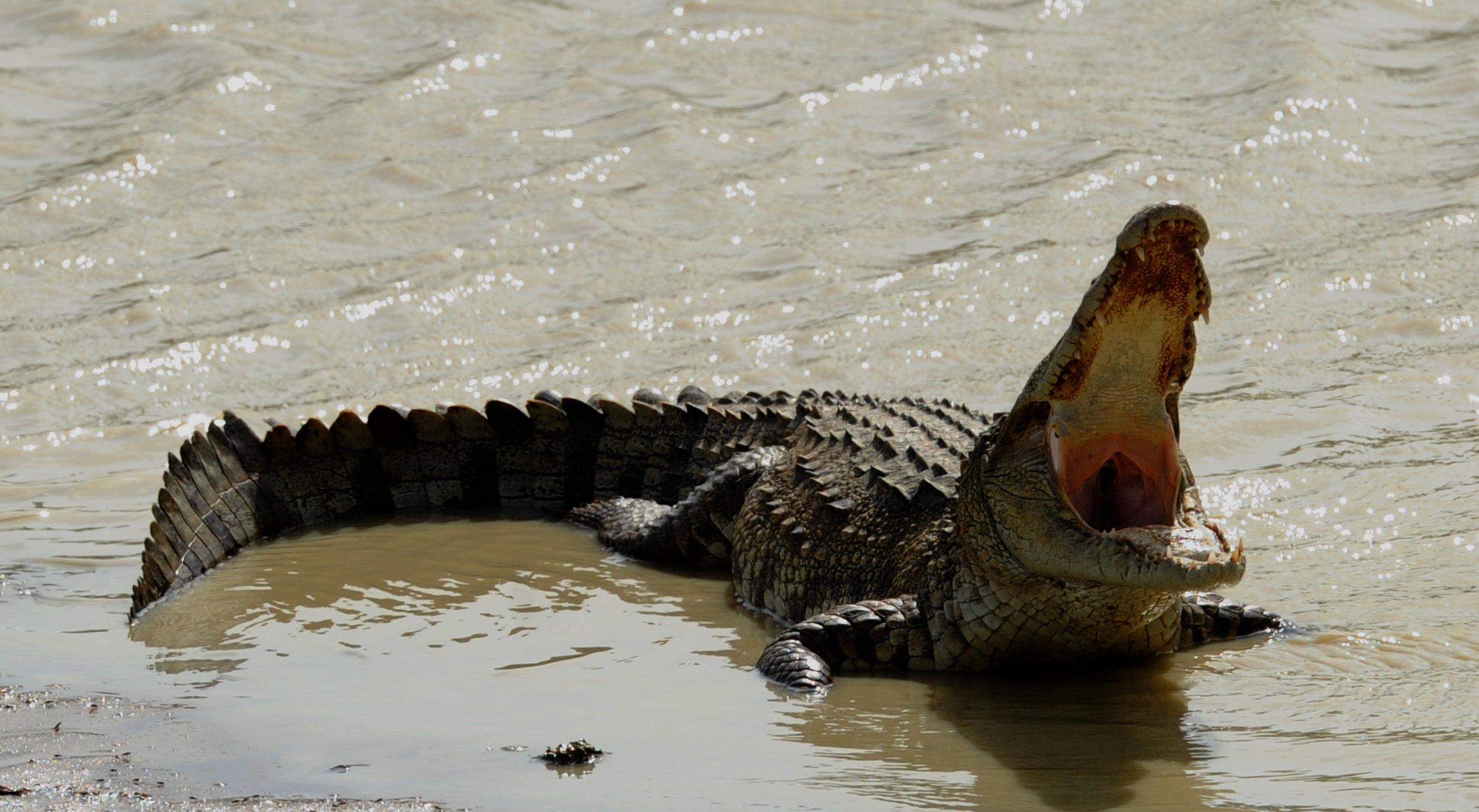 09_15_Sri Lanka_Croc