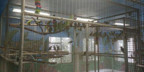 09_15_puerto_rican_parrot_irma