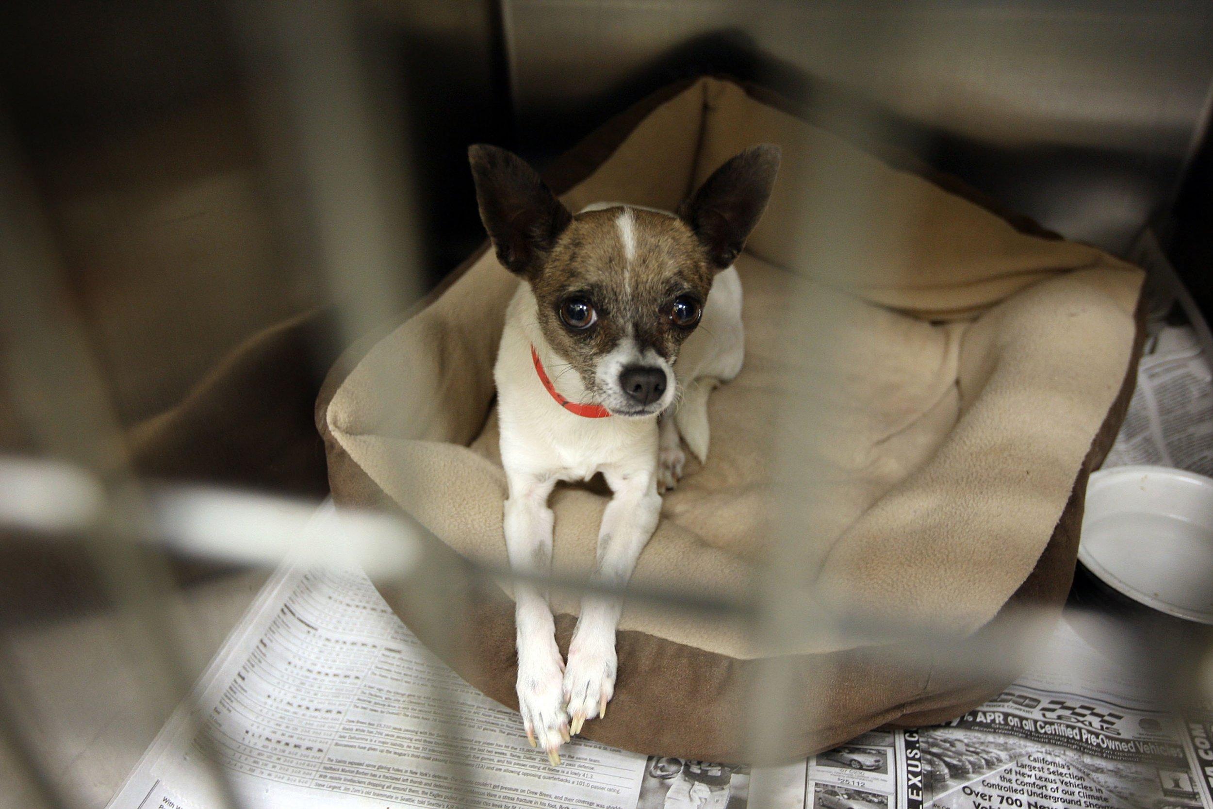 Shelter_Puppy_Dog