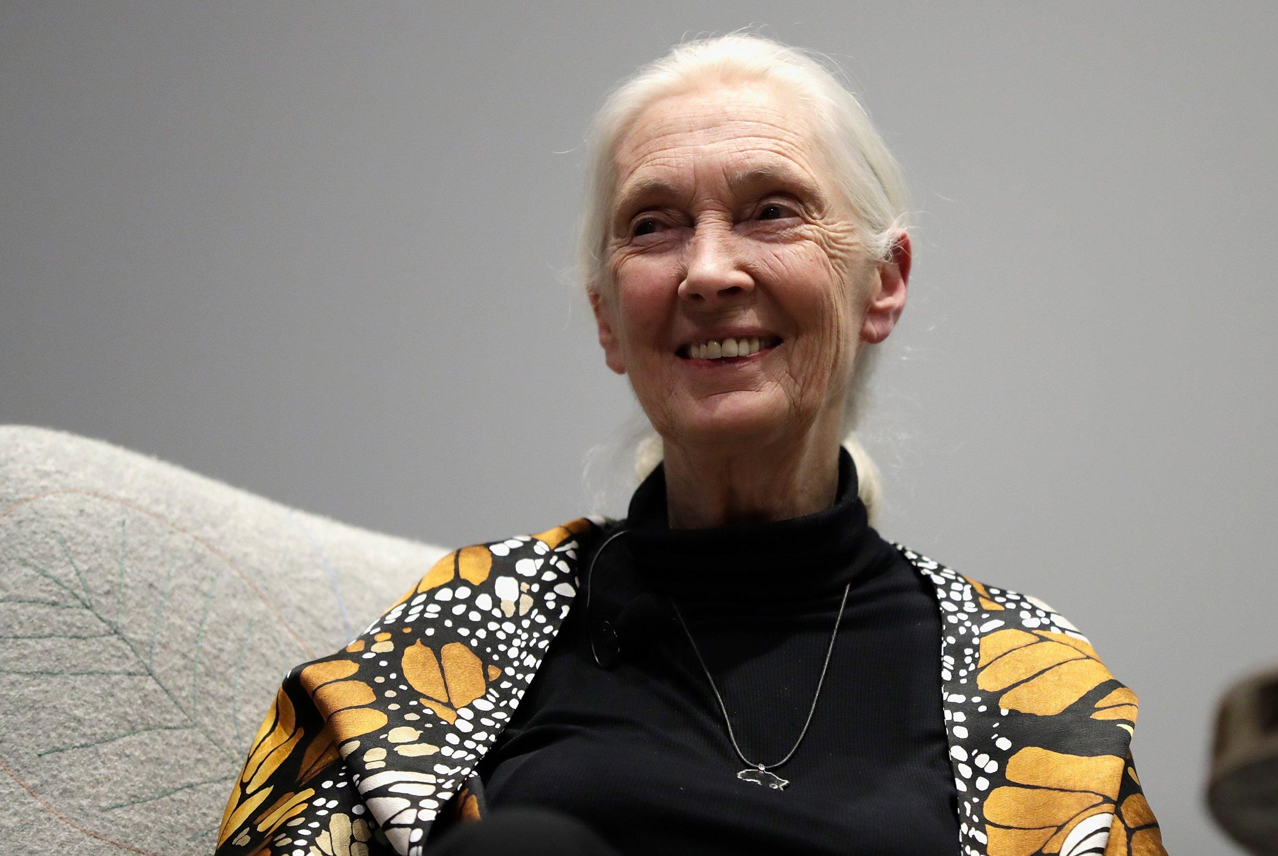 Jane Goodall on Trump's primate behavior