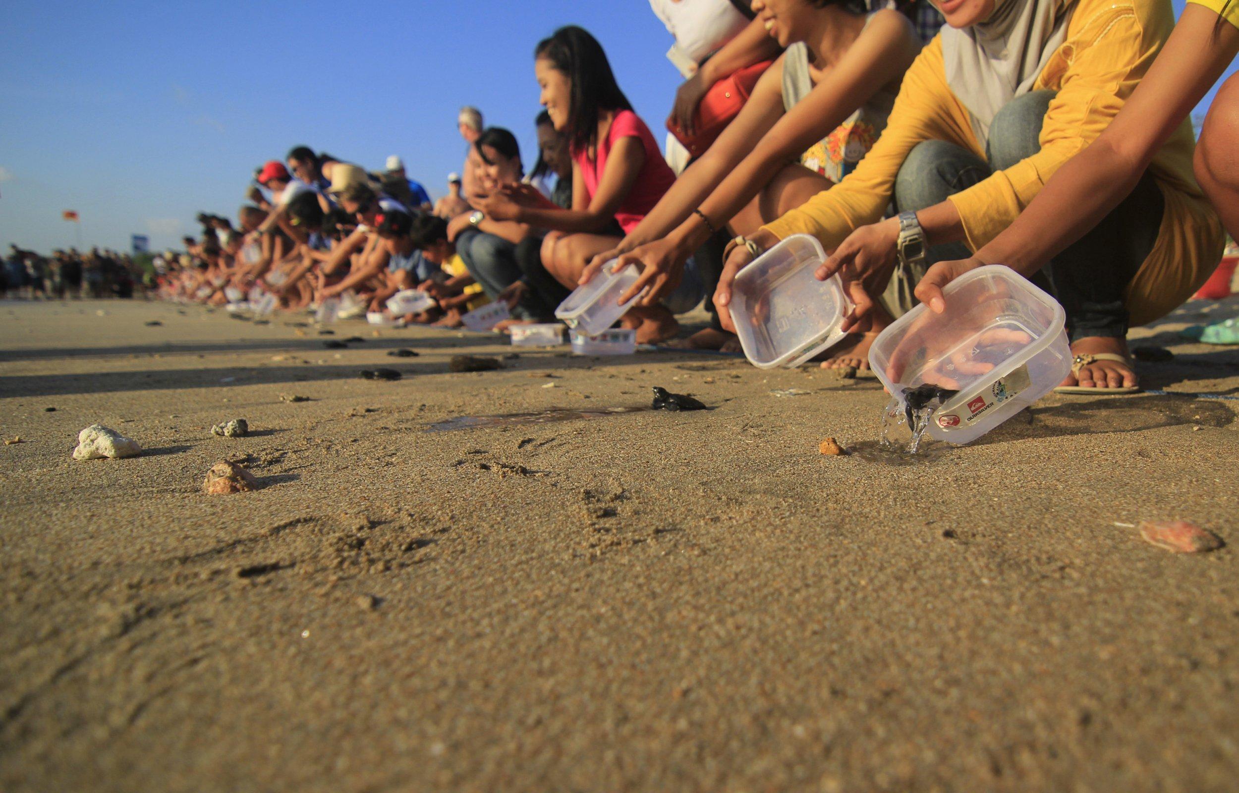 Sea turtle beach release