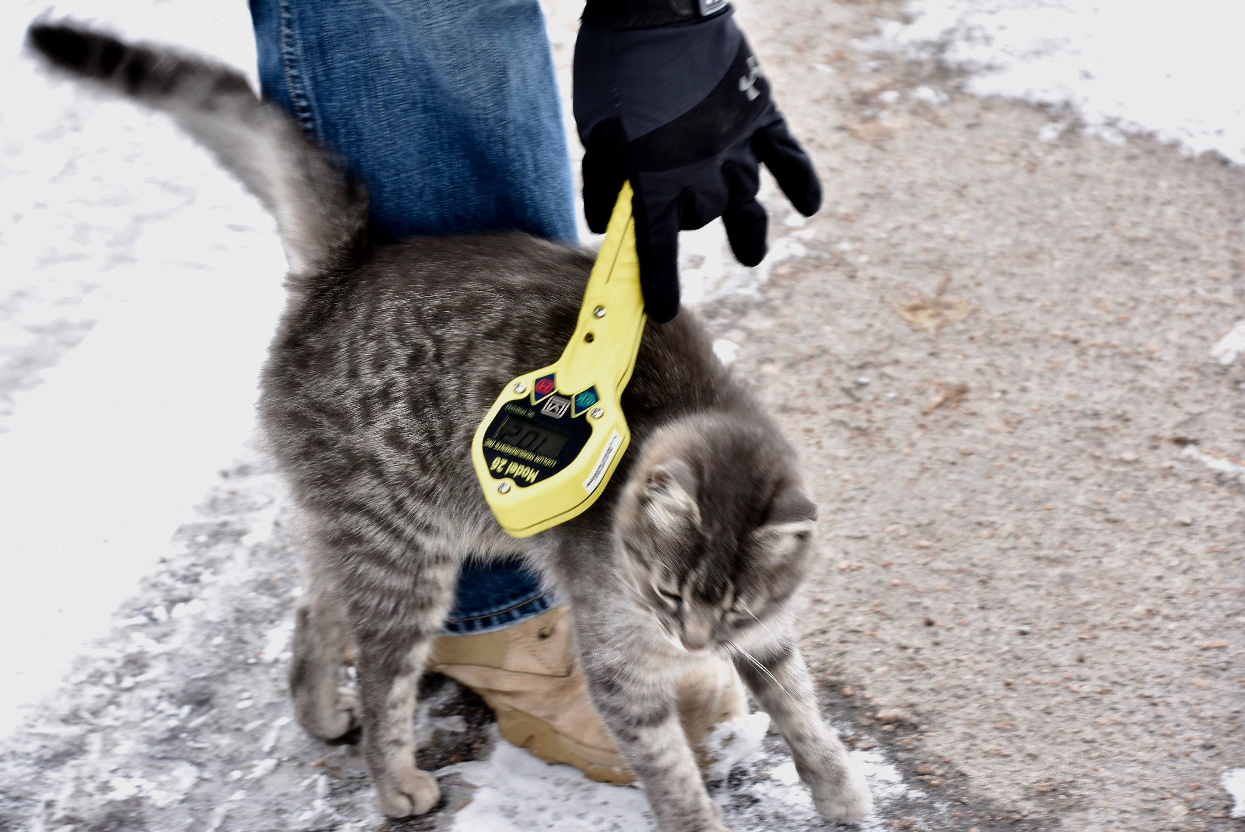 Cat and Geiger counter