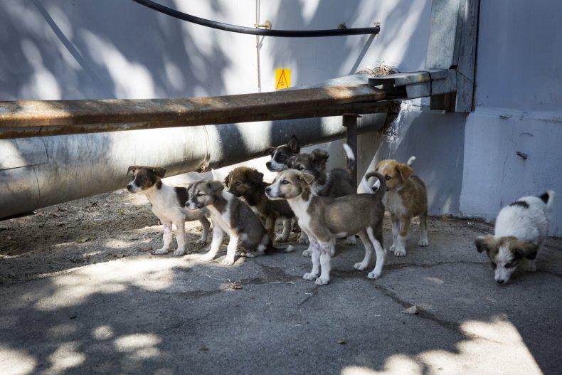 Chernobyl Puppy Crowd