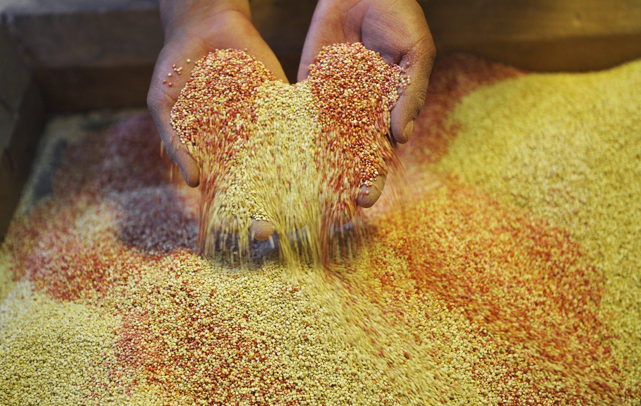 09_25_quinoa in hand_01